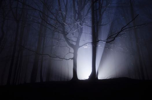 light-rays-forest-at-night-S3ZN7G5